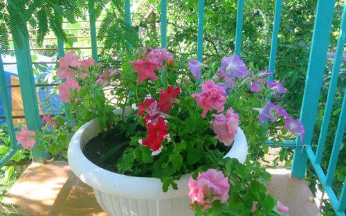 Цветы на балконе второго этажа, Дом на Приморской, 36 Благовещенская